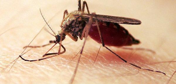 malaria-bambino-tuttacronaca