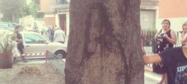 padrepio-albero-tuttacronaca