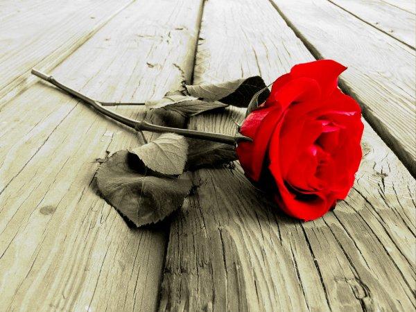 rosa-tuttacronaca-donna-deceduta-costiera-amalfitana