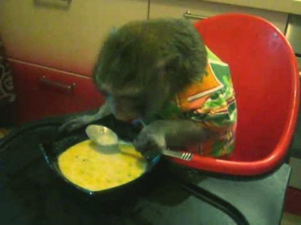 scimmietta-minestra-formaggio-tuttacronaca