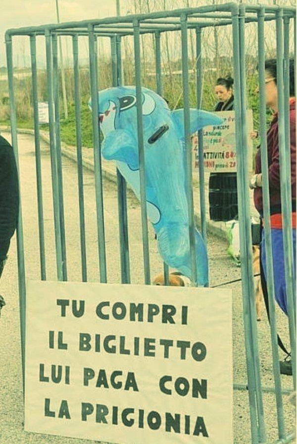 zoomarine-protesta-tuttacronaca
