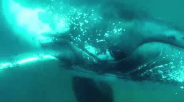 balena-cameraman-tuttacronaca