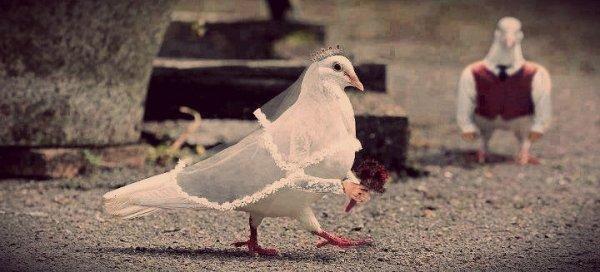 braccia-uccelli-tuttacronaca