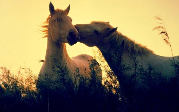 cavalli-navajo-liberi-tuttacronaca
