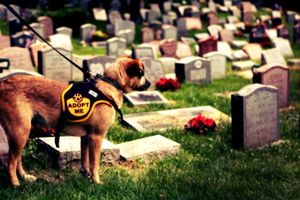 cimitero-per-animali-tuttacronaca