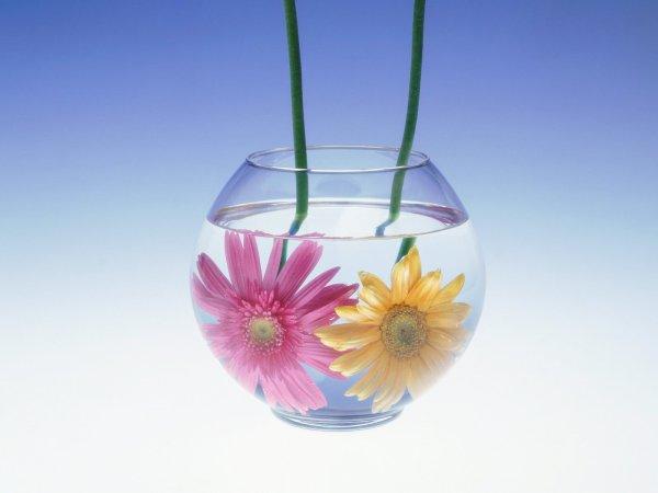 fiori-acqua-tuttacronaca