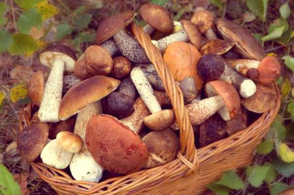 funghi-crudi-mazara-del-vallo-tuttacronaca