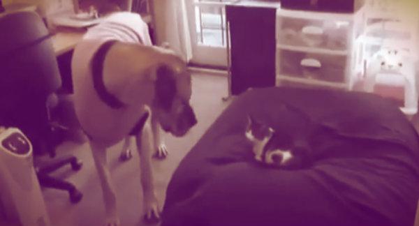 gatti-ladro-cuccia-tuttacronaca