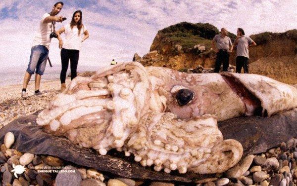 giant-squid-tuttacronaca