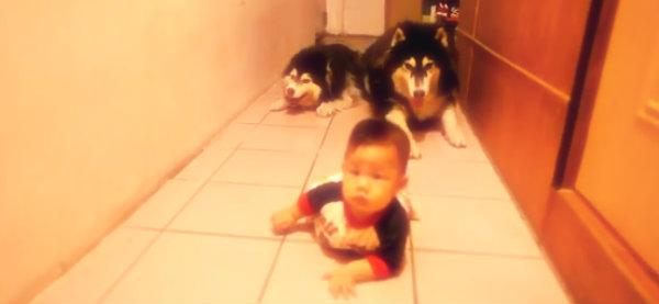 husky-gattonano-bebè-tuttacronaca