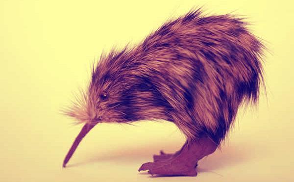 kiwi-newzeland-tuttacronaca