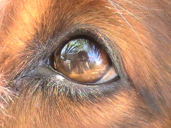 Occhio-di-cane-tuttacronaca-