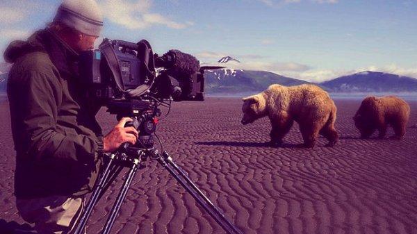 orso-bbc-tuttacronaca