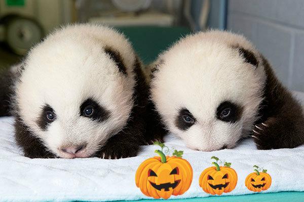 panda-tuttacronaca