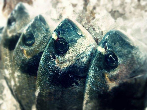 pesce-cafodos-tuttacronaca