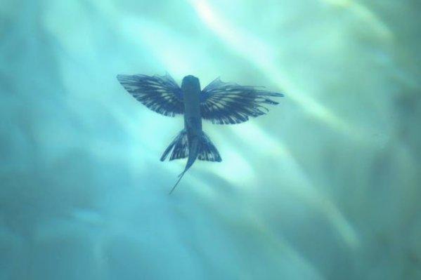 pesci-volanti-venezia-tuttacronaca