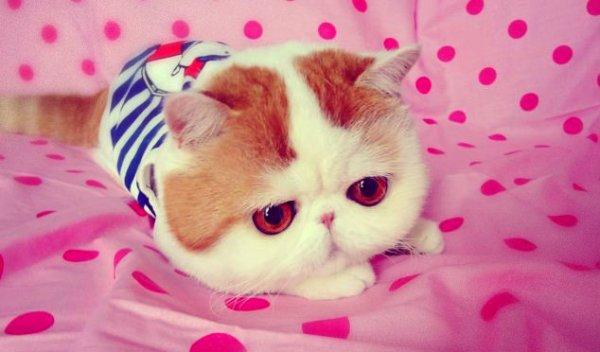 Snoopy-il-gatto-cinese-che-spopola-sui-social-network-tuttacronaca