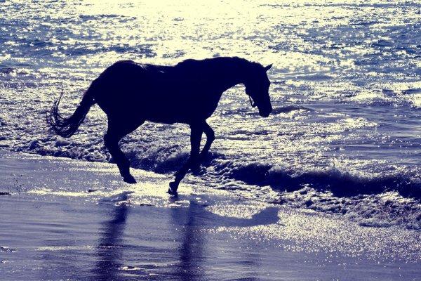 spiaggia-tuttacronaca