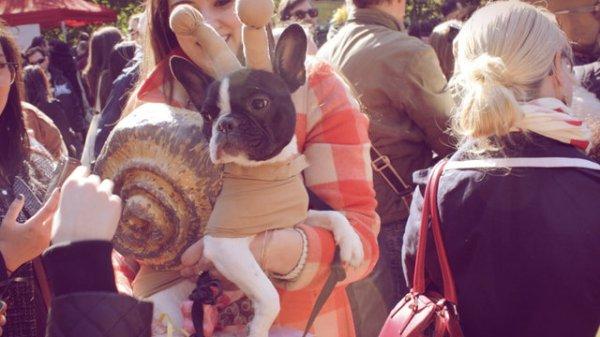 tuttacronaca-cane-lumaca-dog-parade-halloween