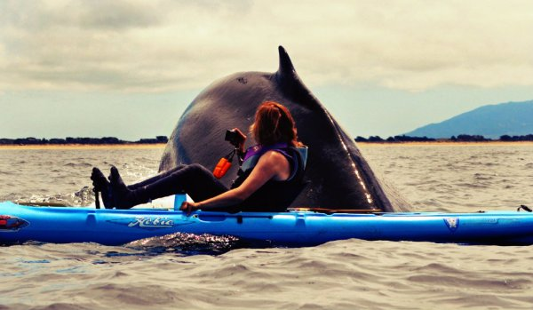 balena-kayak-tuttacronaca