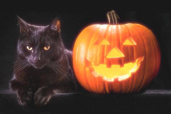 black-cat-pumpkin-tuttacronaca