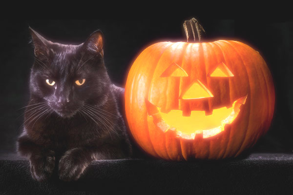 black-cat-pumpkin-tuttacronaca