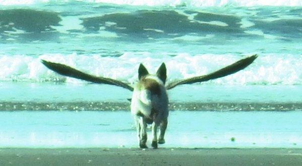 cane-ali-tuttacronaca