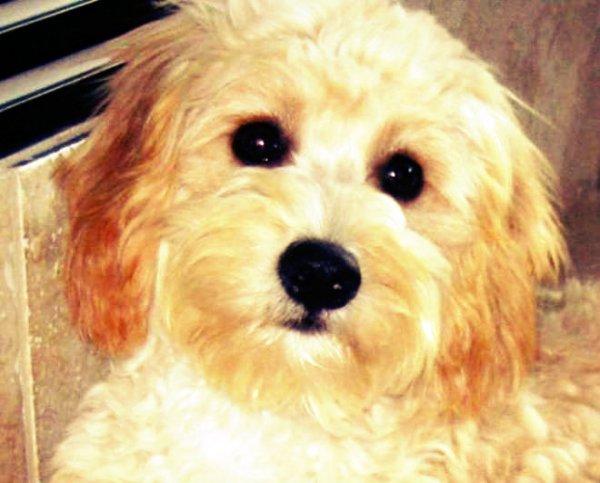 cane-non-invecchia-tuttacronaca