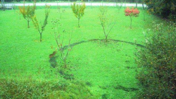 cerchio-erba-tuttacronaca