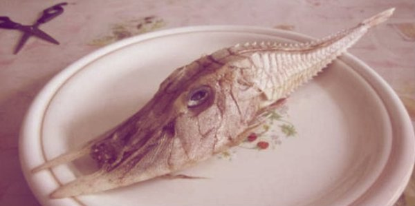 cina1-pesce-tuttacronaca
