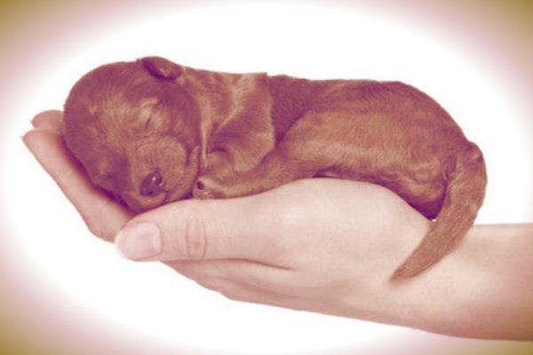 cucciolo-di-cane-tuttacronaca
