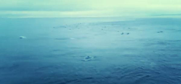 delfini-tuttacronaca