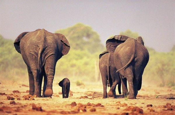elefanti-tuttacronaca