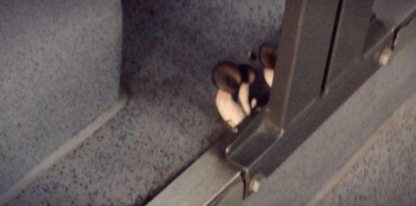 funghi-autobus-tuttacronaca