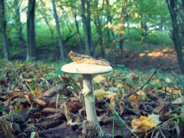 funghi-intossicazione-tuttacronaca