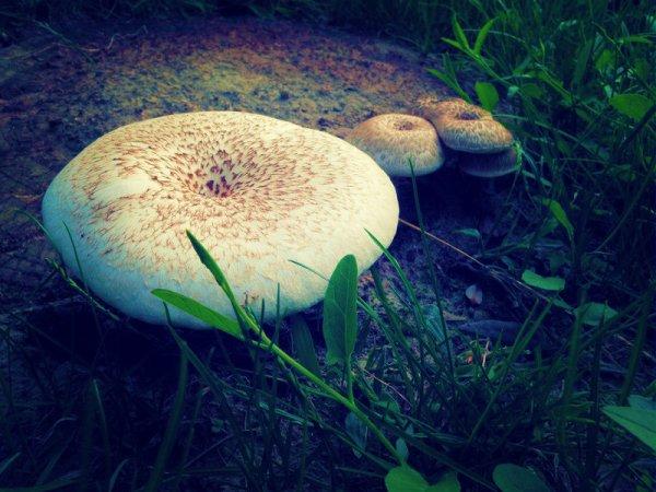 funghi-tuttacronaca