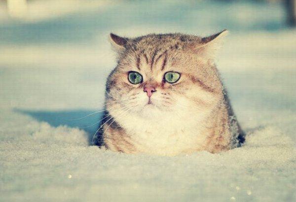 neve-marche-tuttacronaca