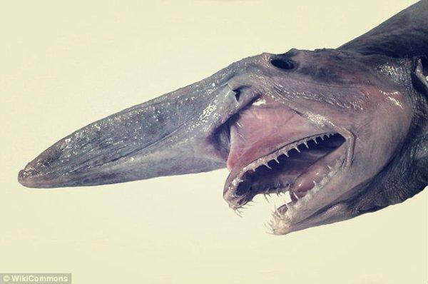 pesce-naso-tuttacronaca