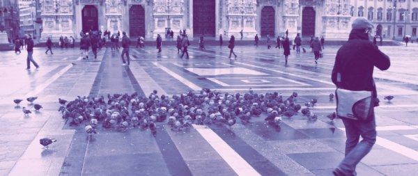 piccioni-milano-tuttacronaca