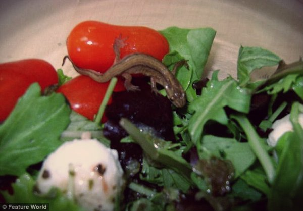 salamandra-insalata-tuttacronaca