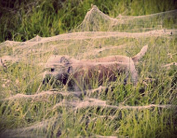 scie-chimiche-spider balooning-tuttacronaca