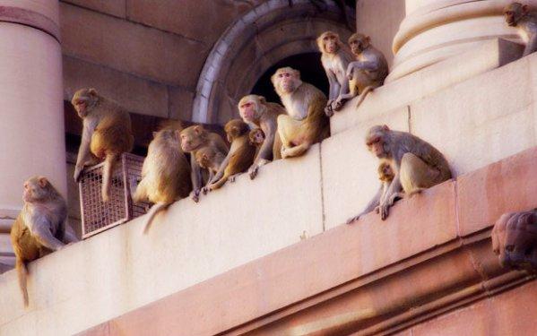 scimmie-tuttacronaca