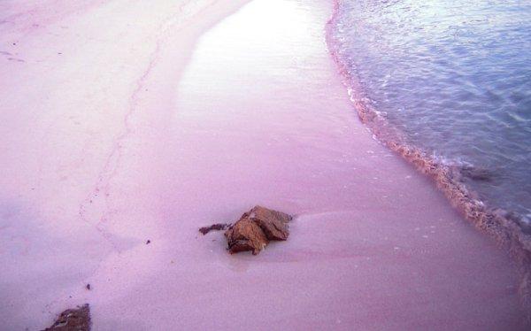 spiaggia-rosa-tuttacronaca