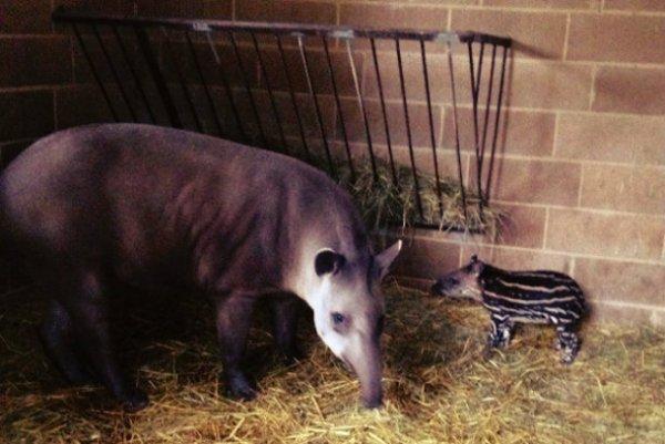 tapiro-tuttacronaca