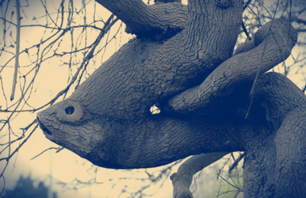 alberi-statue-tuttacronaca