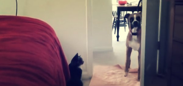 cane-gatto-tuttacronaca