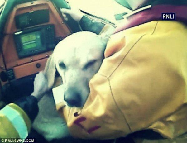 cane-recuperato-tuttacronaca