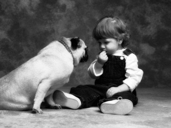 cane-tuttacronaca