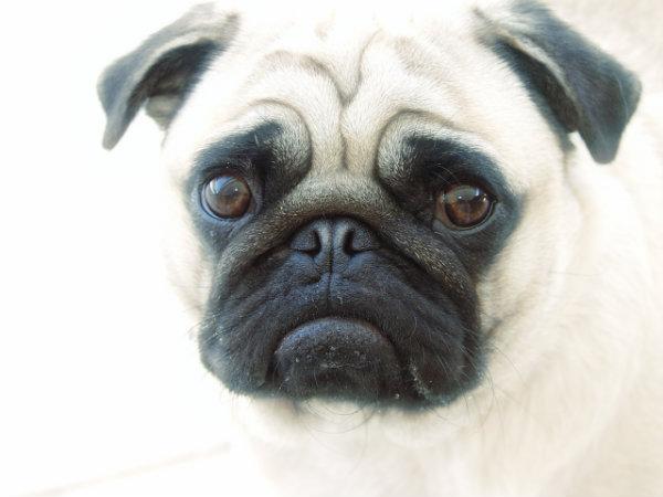 cani-sterilizzazione-tuttacronaca