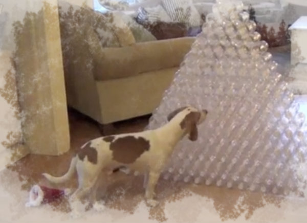Dog-Gets-210-Bottles-For-Christmas-tuttacronaca